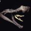 史前巨鳄疯狂捕杀恐龙 普鲁斯鳄化石大揭密